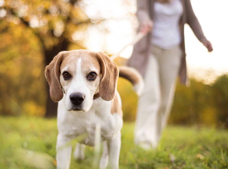 Head of the Class Dog Training LLC